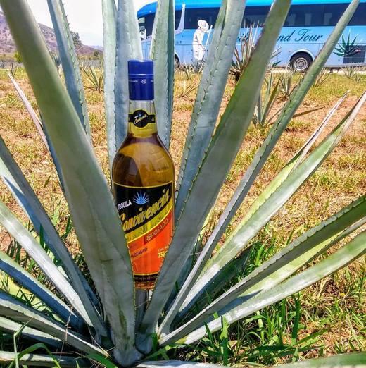Tequila Convivencia